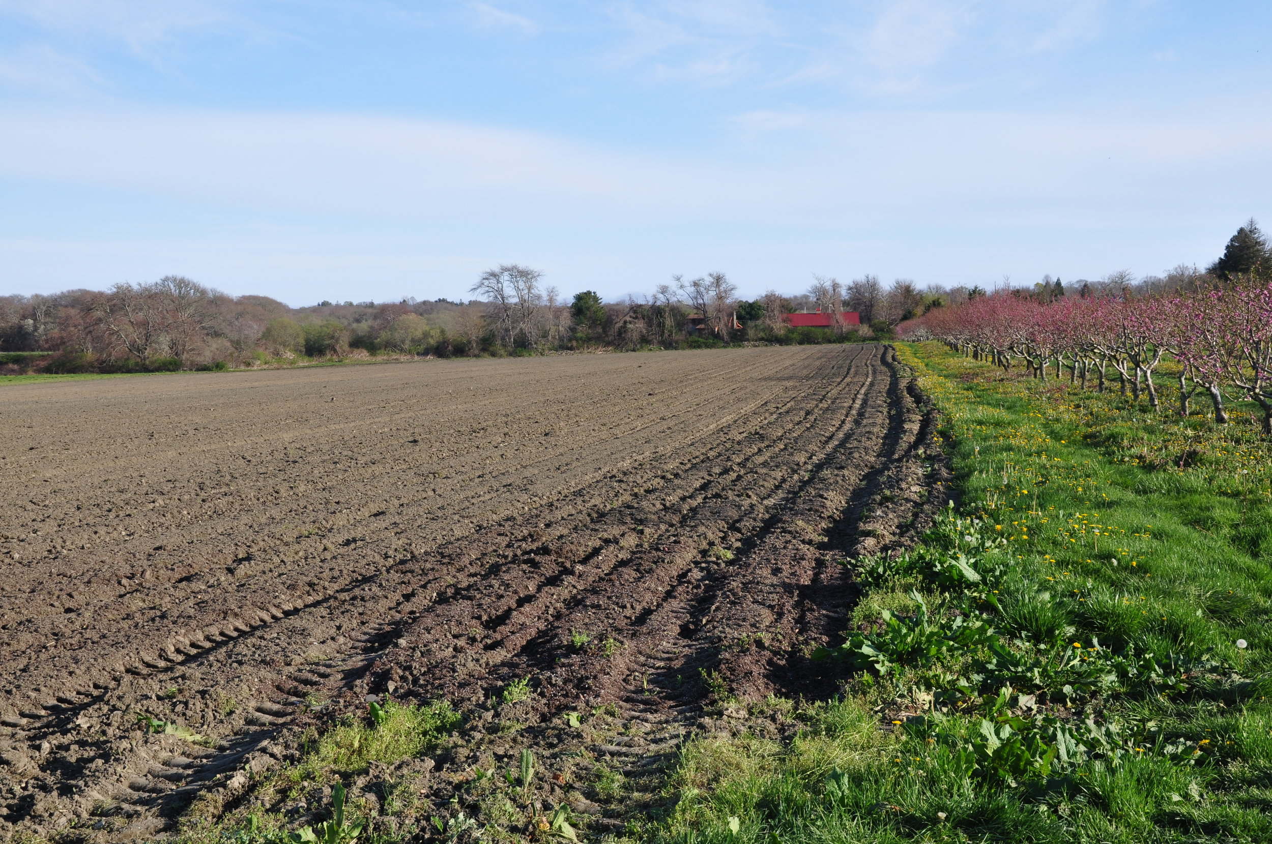 A glimpse from a day of planting 12 acres of potatoes.
