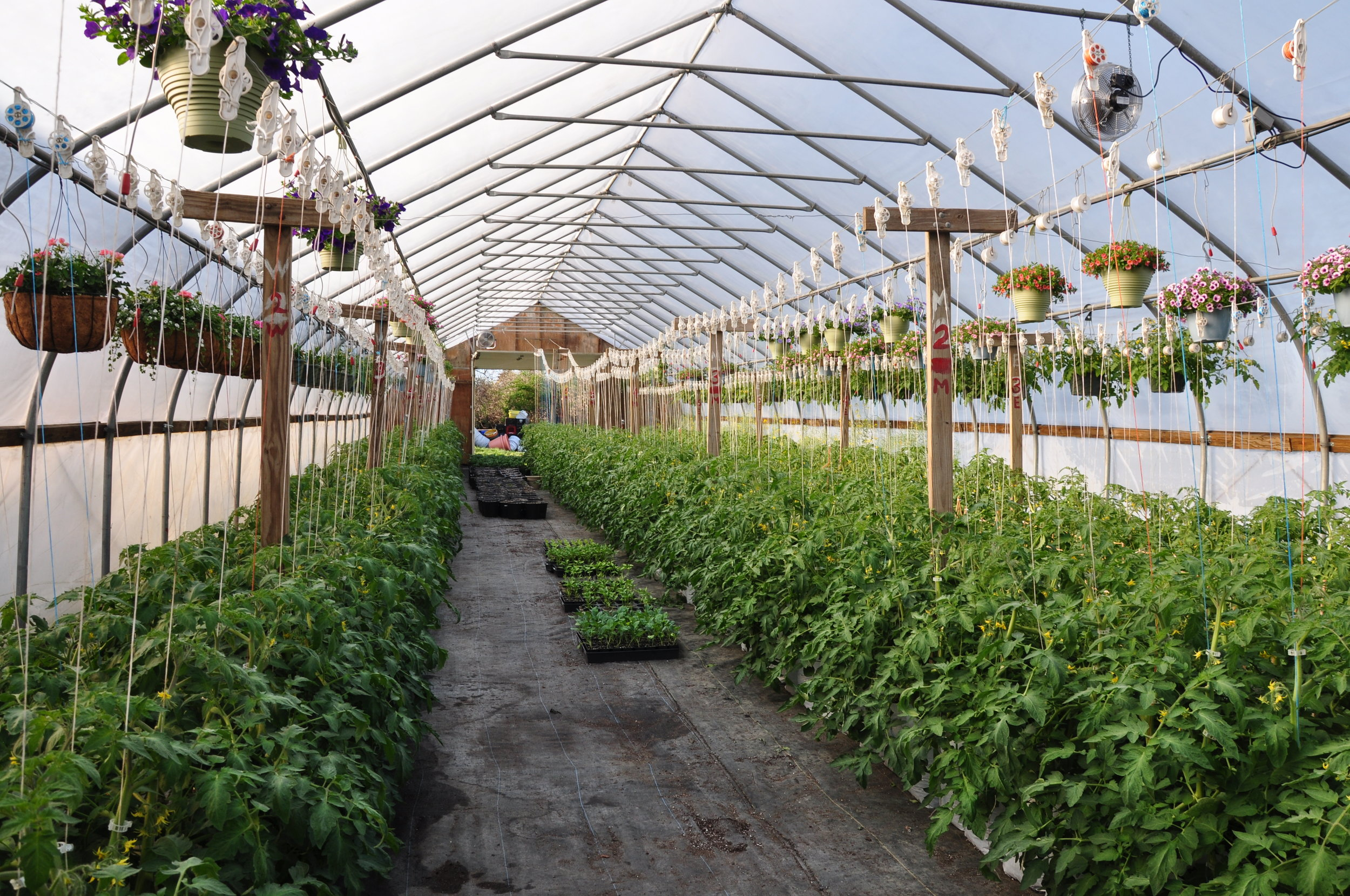 """A look at just a few of the picturesque spots on Young Family Farm, a 300-acre property with a five-acre pond, 3/4 mile of irrigation, three greenhouses — one for tomatoes, one for growing retail flowers and one for """"babies"""" or seeds — and a spacious retail farm stand on West Main Road in Little Compton, RI."""