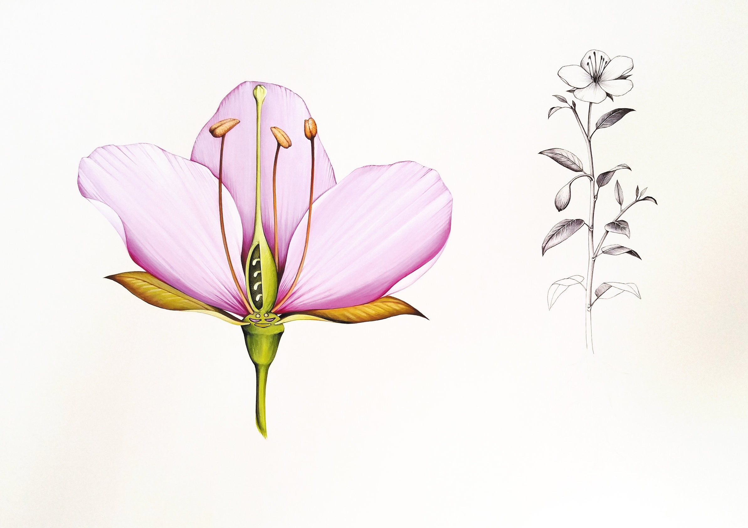 Ink Dwell (Jane Kim)