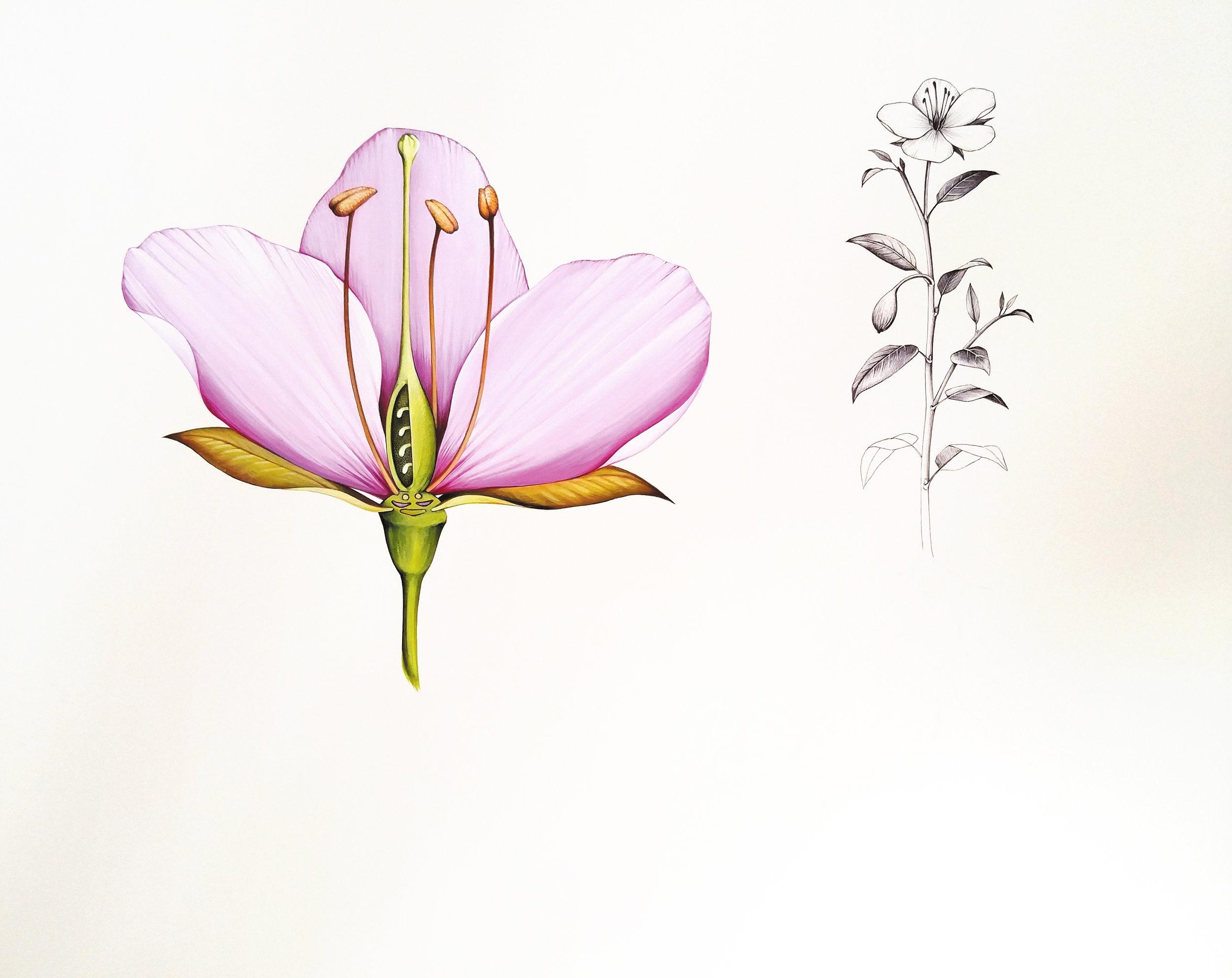 Flora Generica-res300-resampled.jpg