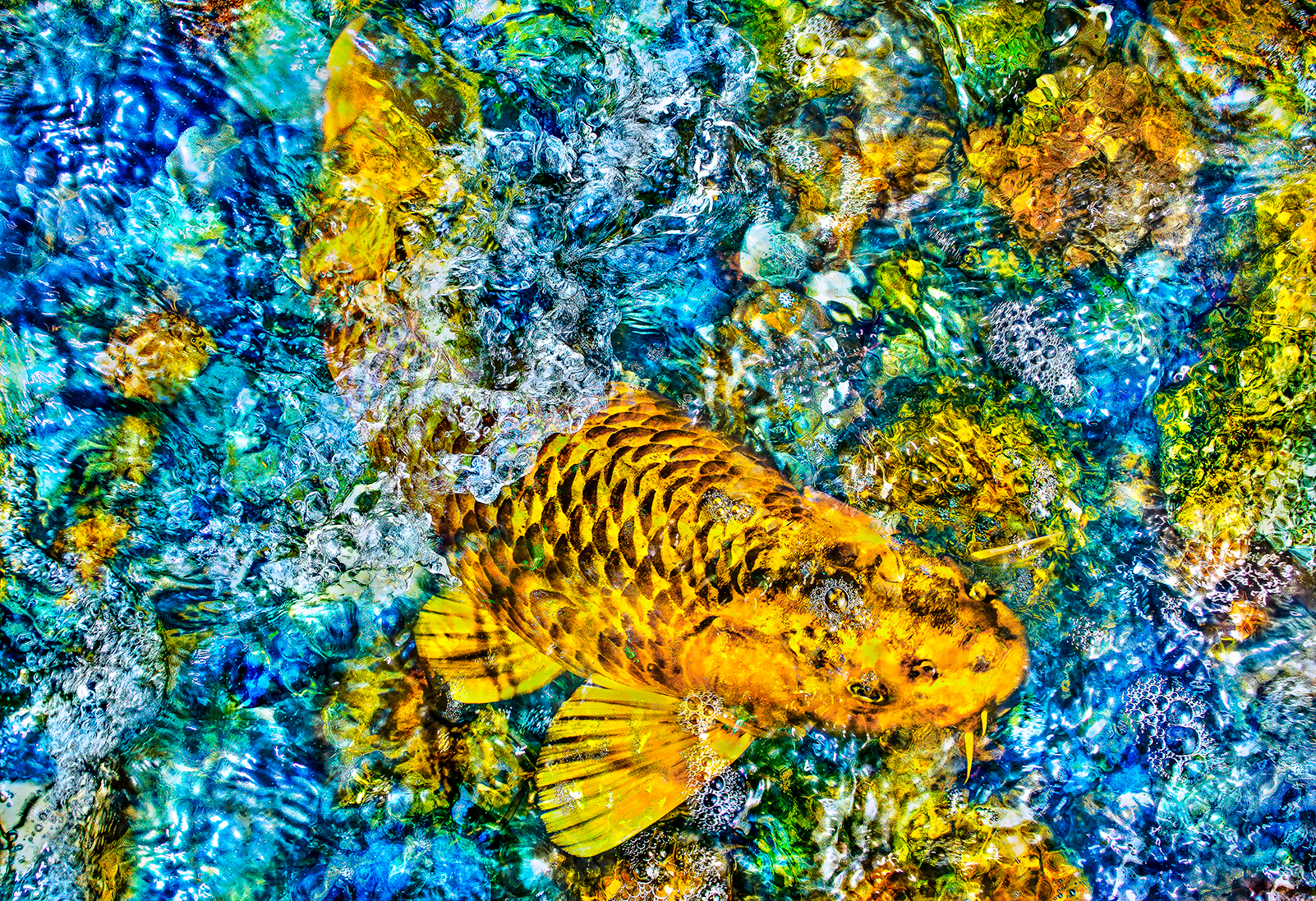 Koi #2 , 2019  Pigment ink on Japanese Gampi paper hot encaustic medium infusion cold wax medium glazed  13 × 19 in  33 × 48.3 cm  Edition 1/10   Inquire