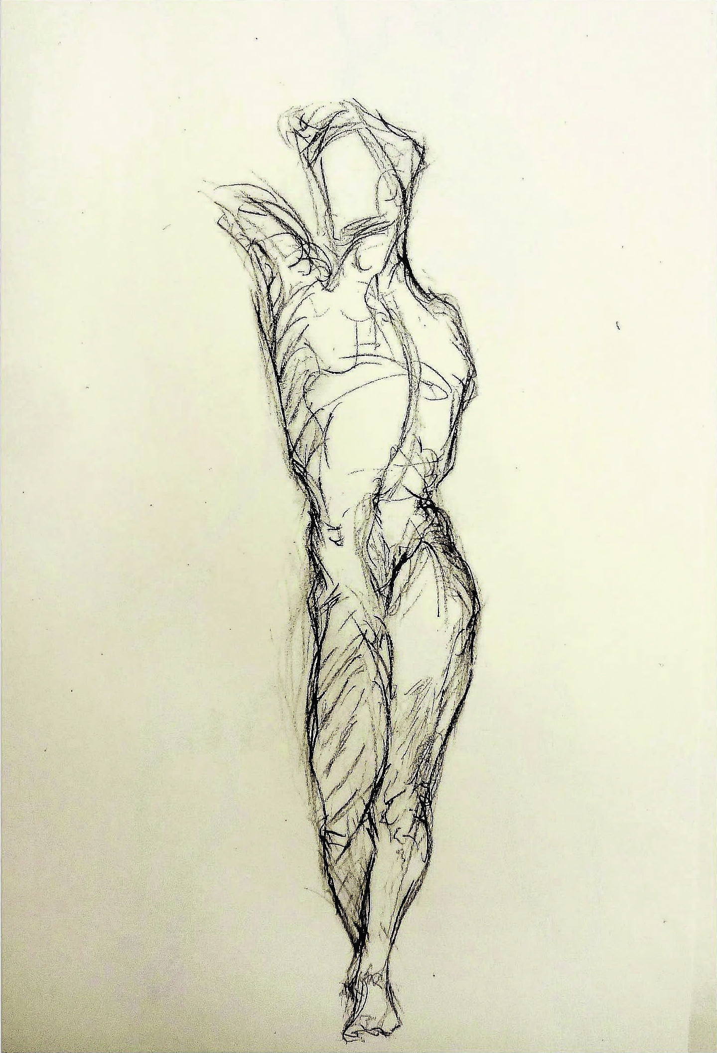 Male Torso - Class Exercise  , N/A  Pencil on paper  12 1/4 × 9 3/4 in   Inquire