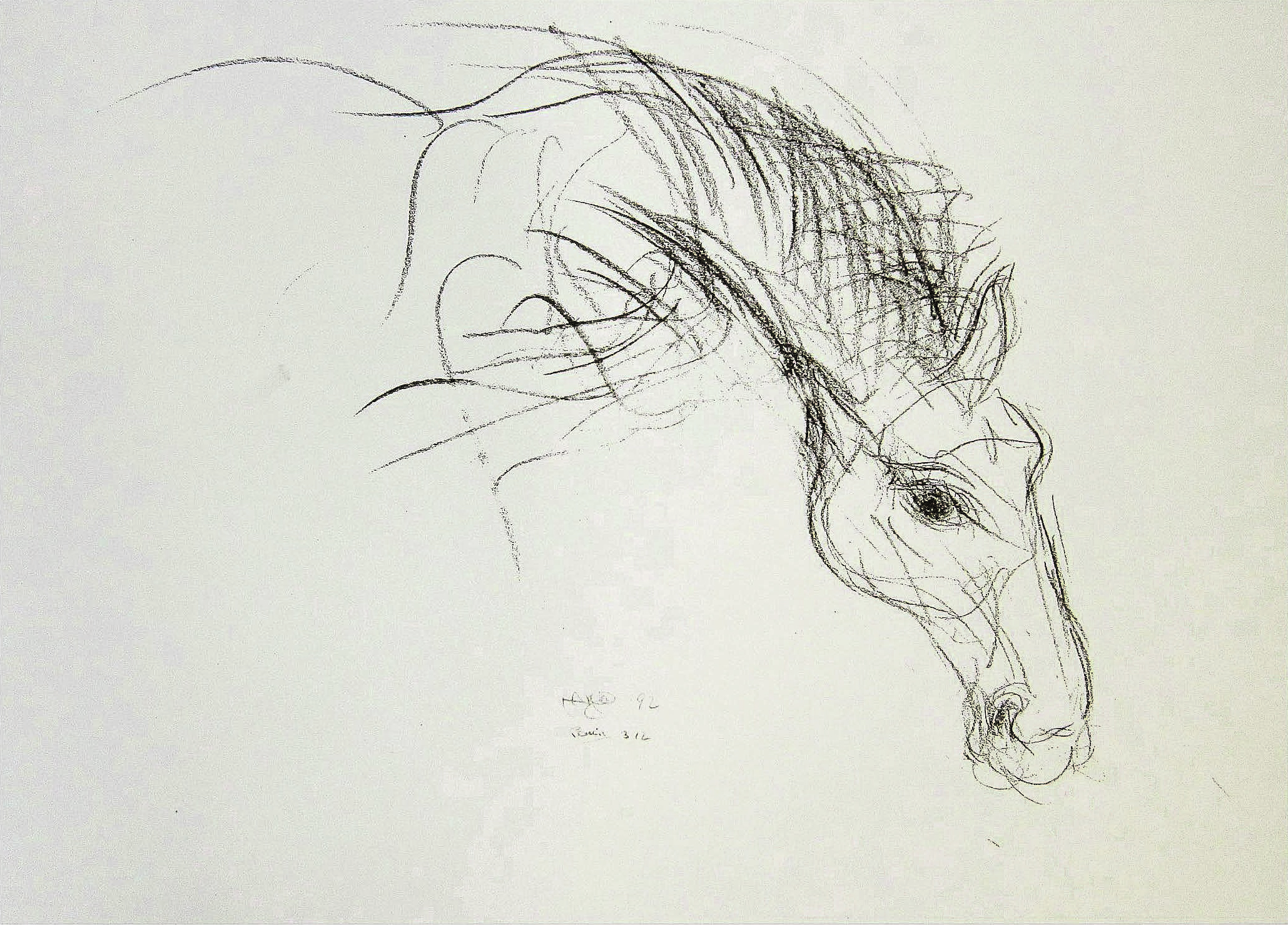 """Edward"" Irish race Horse 1994 , N/A  Pencil on paper  11 × 14 1/2 in   Inquire"