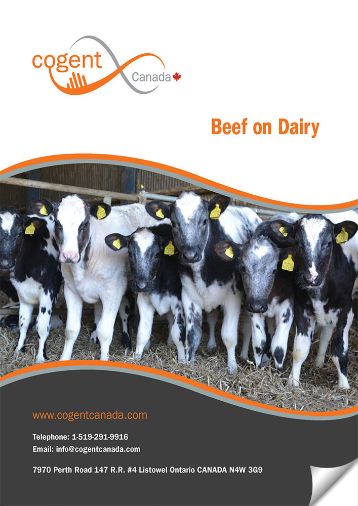 Beef on Dairy Catalogue