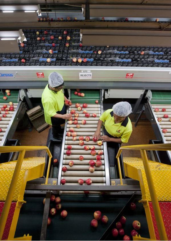 Packhouse of Whakatu Business Mr Apple. Photo /Glenn Taylor