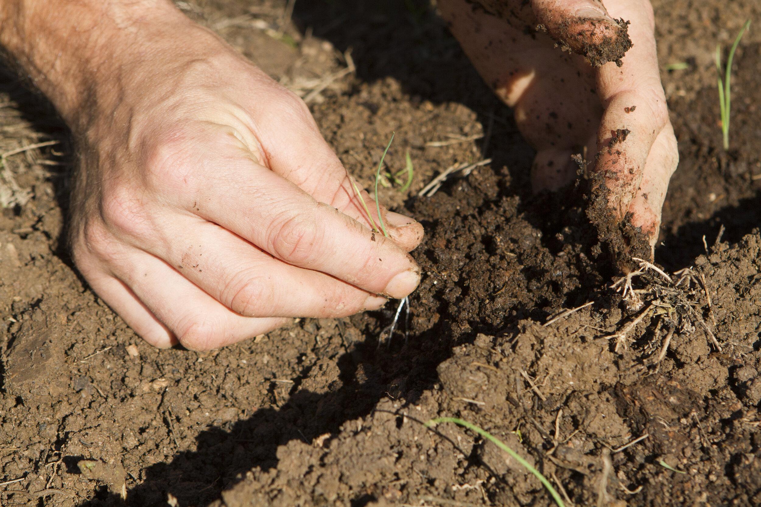 landwirtschaft7405.jpg