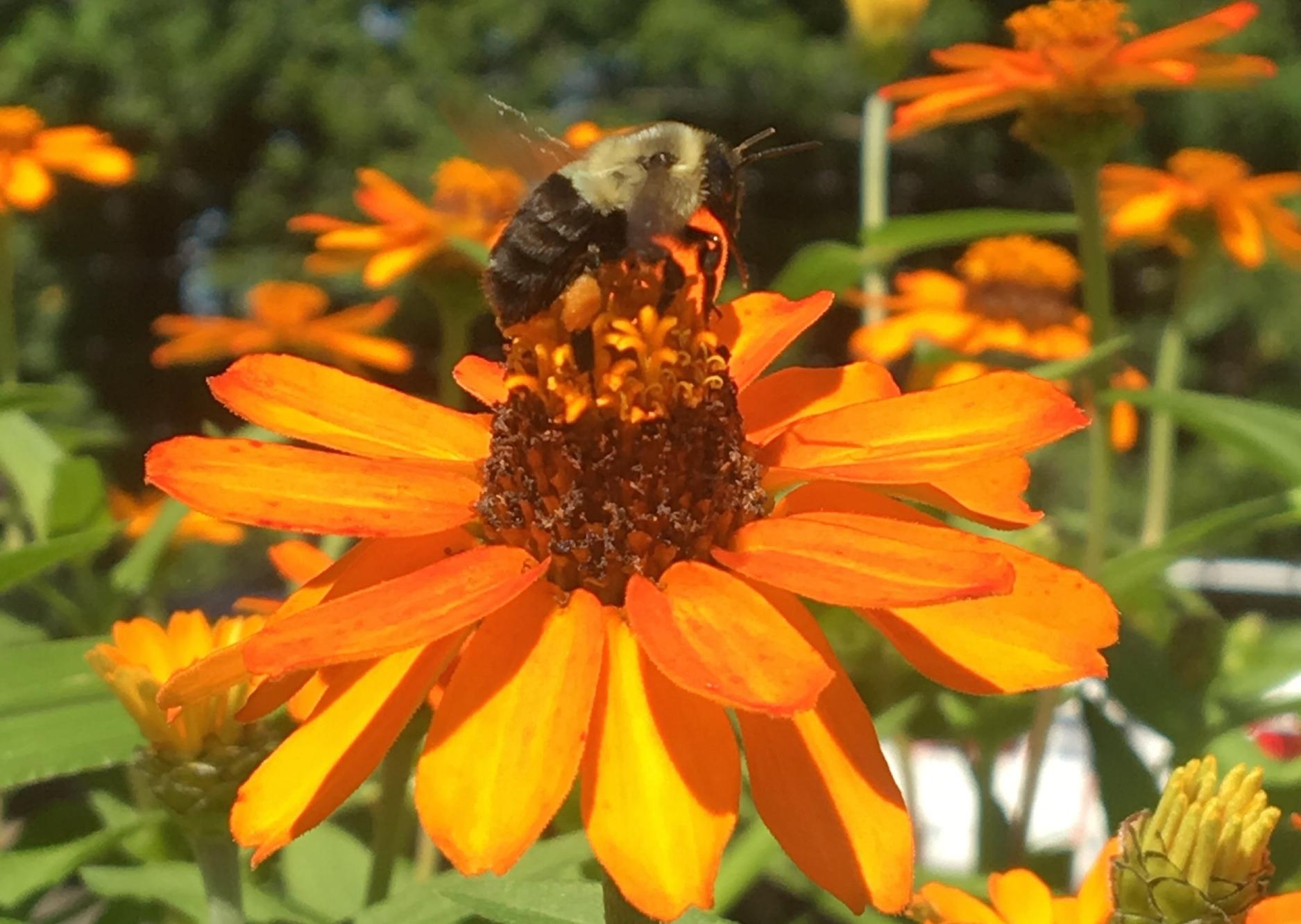 Therapeutic Herb Garden in Bloom