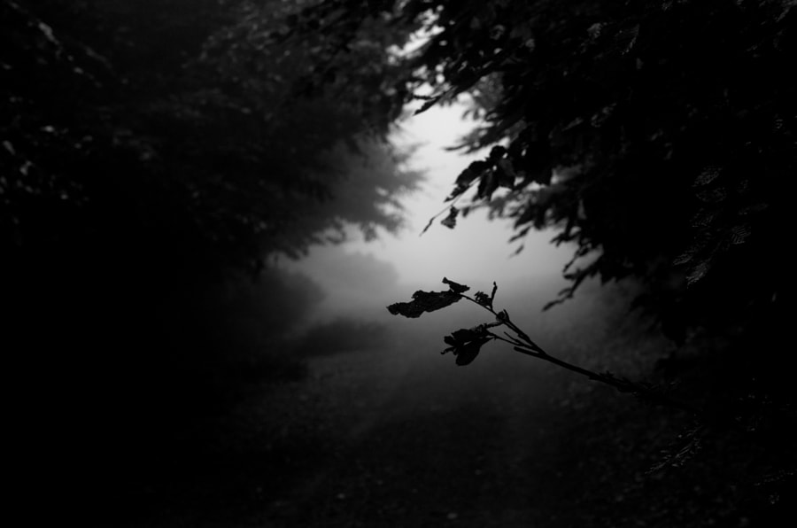 Lonely leaf in a dark jungle