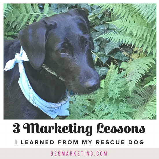 marketing lessons from my rescue dog | 929 marketing | rachelbjordan