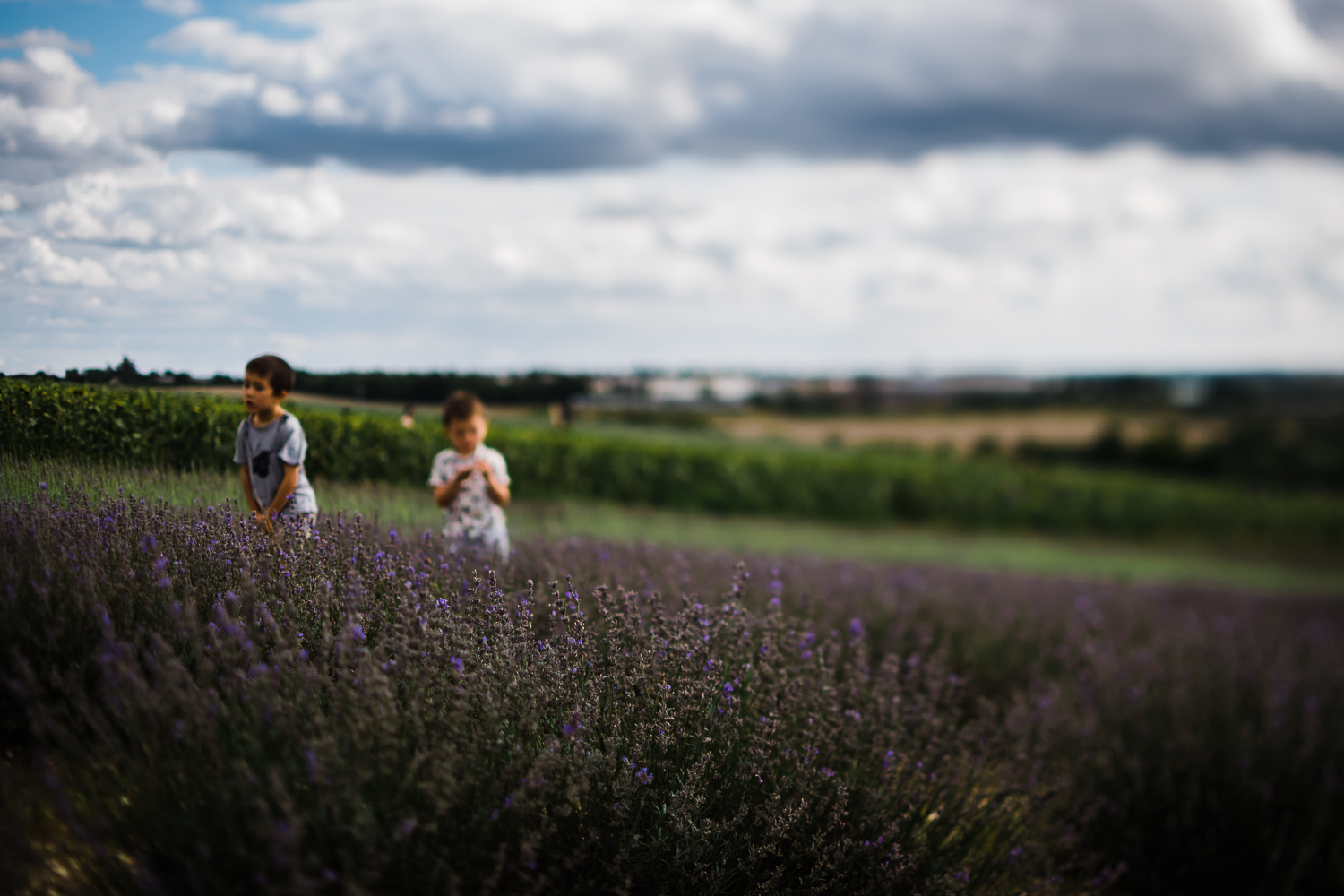 Hitchin Lavender Farm late summer blue sky and purple fields