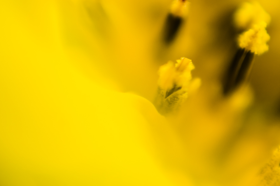 Diana Hagues Photography Freelensing summer adventures -  macro sunflower.jpg