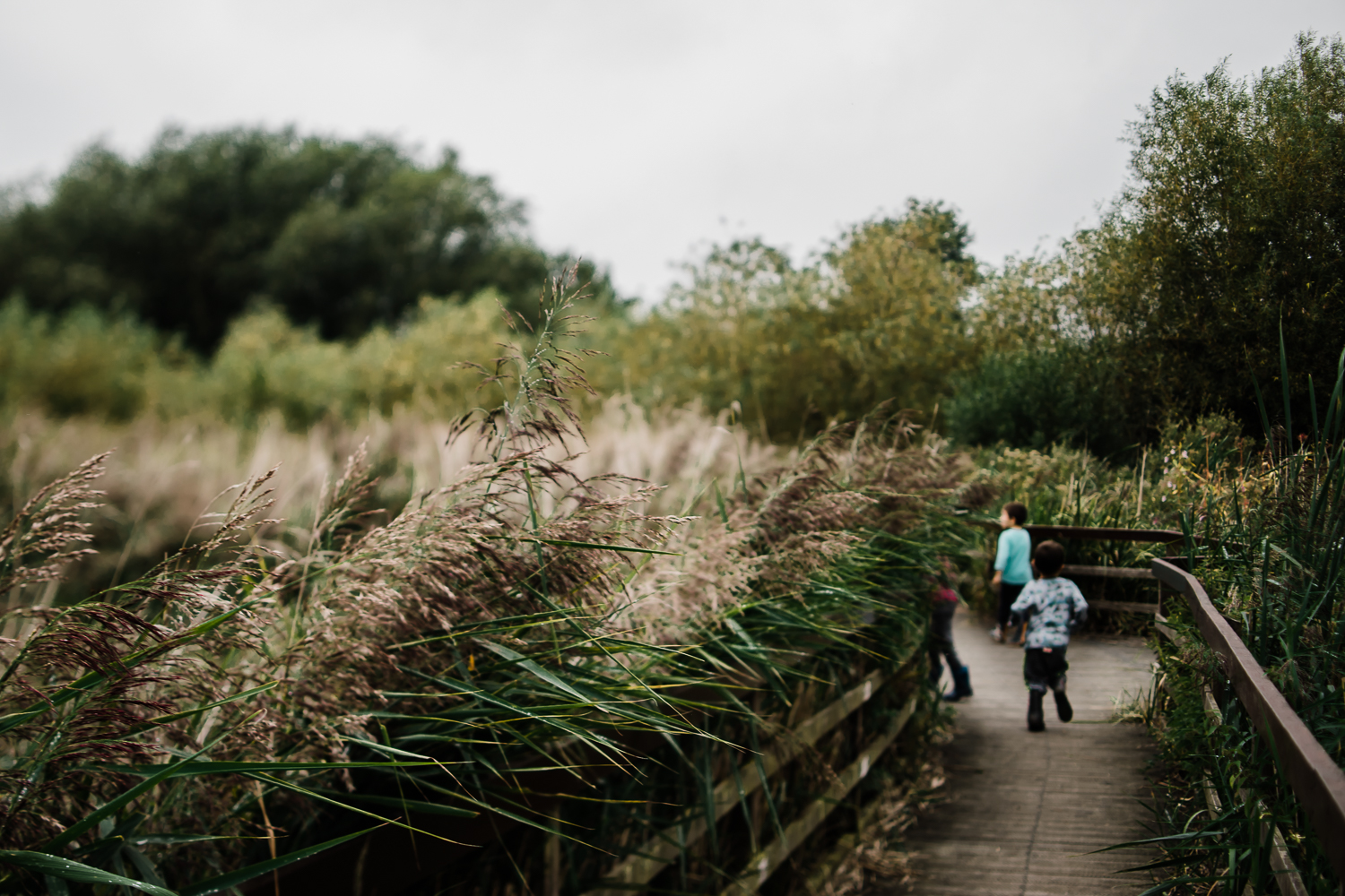 Freelensing - Free 52 project - Sept Oct 17 - Diana Hagues Photography-13.jpg
