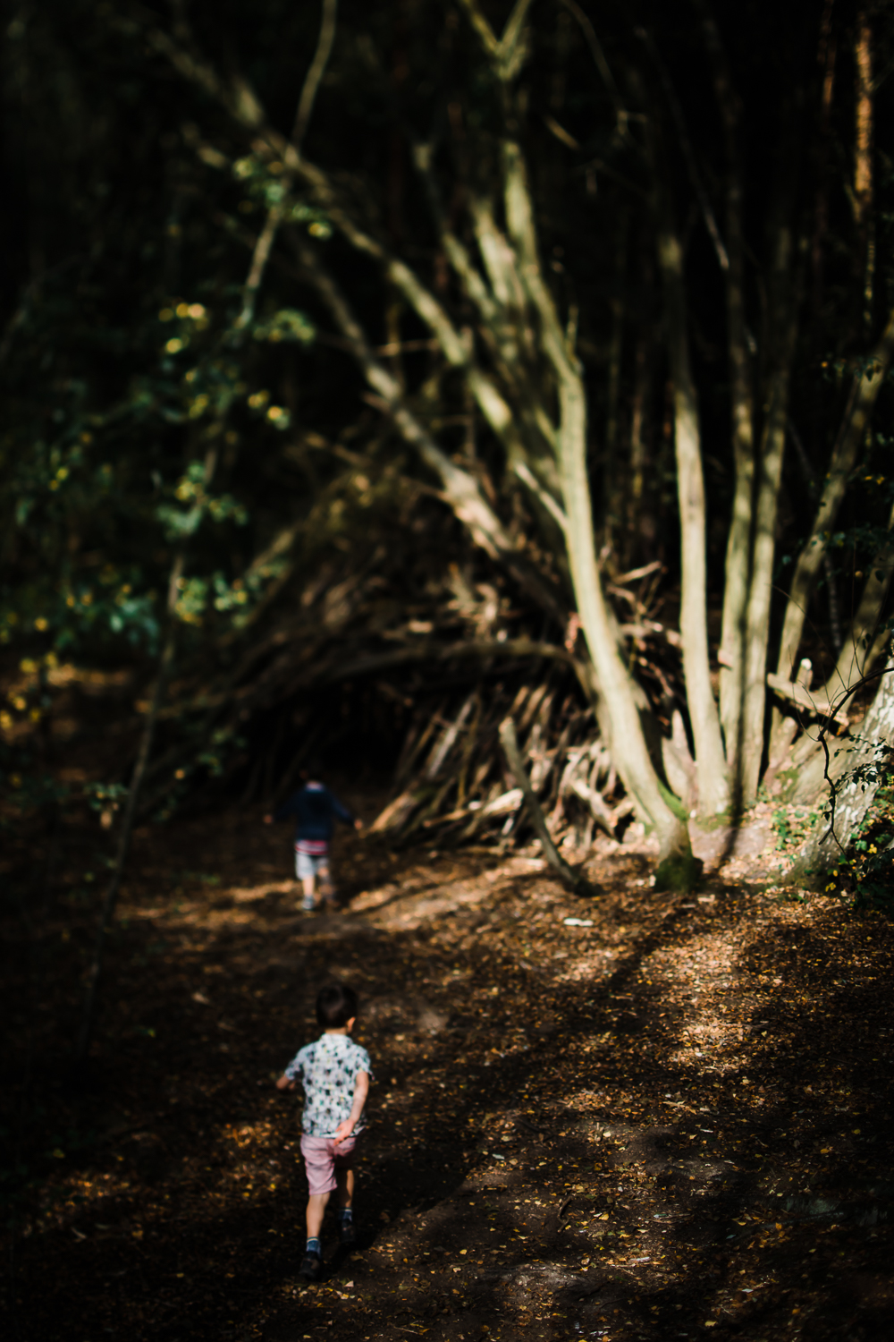 Freelensing - Free 52 project - Sept Oct 17 - Diana Hagues Photography-4.jpg