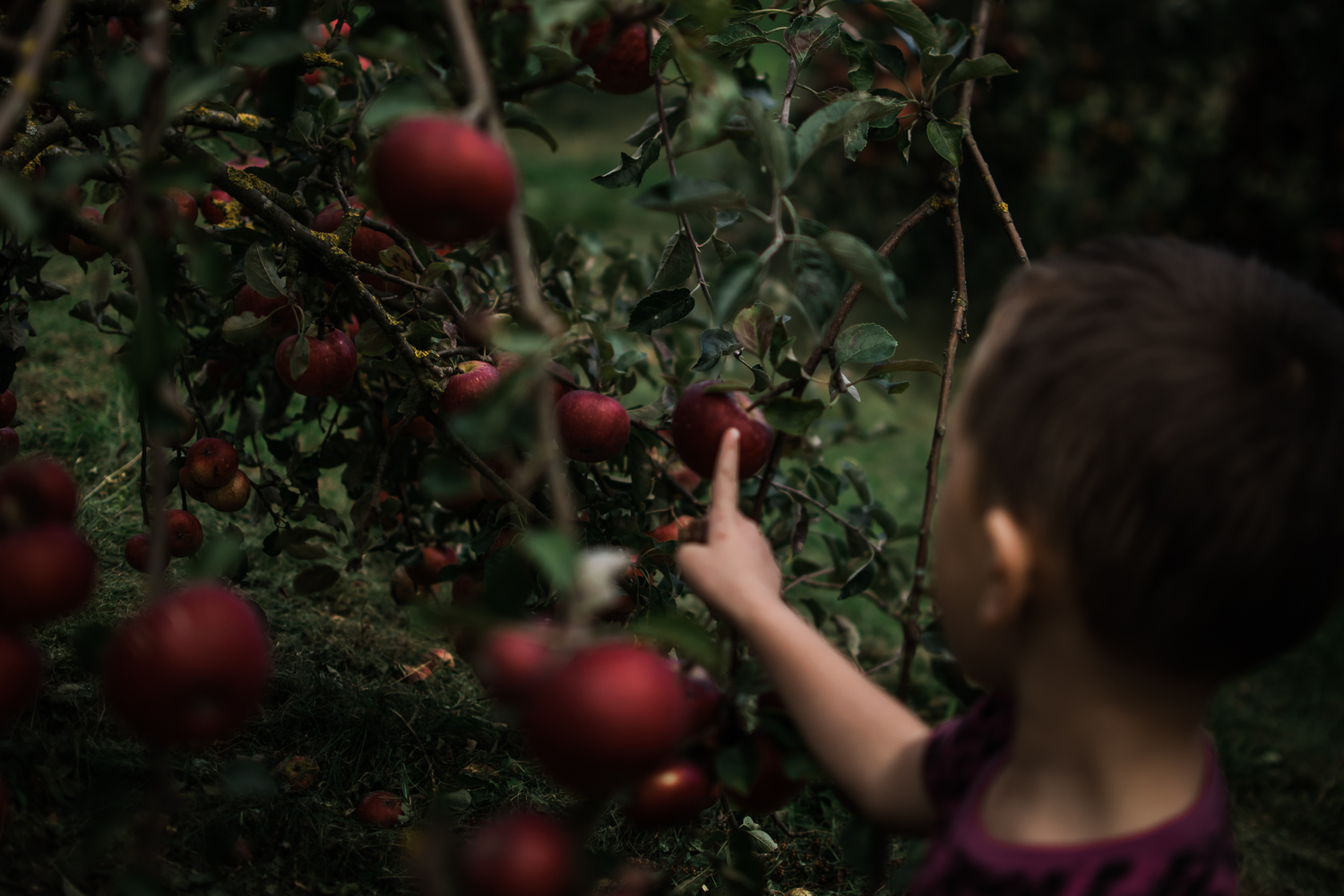 Freelensing - Free 52 project - Sept Oct 17 - Diana Hagues Photography-25.jpg