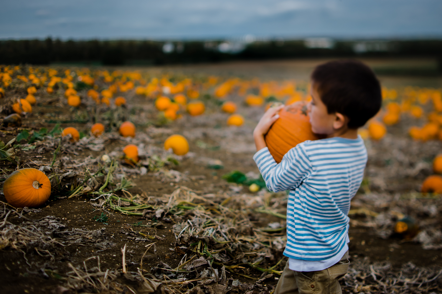 Freelensing - Free 52 project - Sept Oct 17 - Diana Hagues Photography-7.jpg