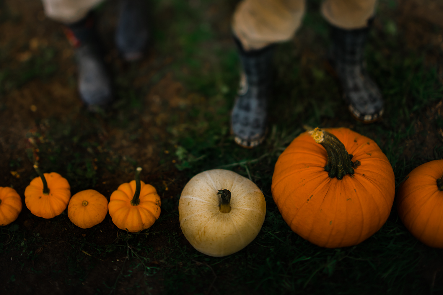 Freelensing - Free 52 project - Sept Oct 17 - Diana Hagues Photography-6.jpg