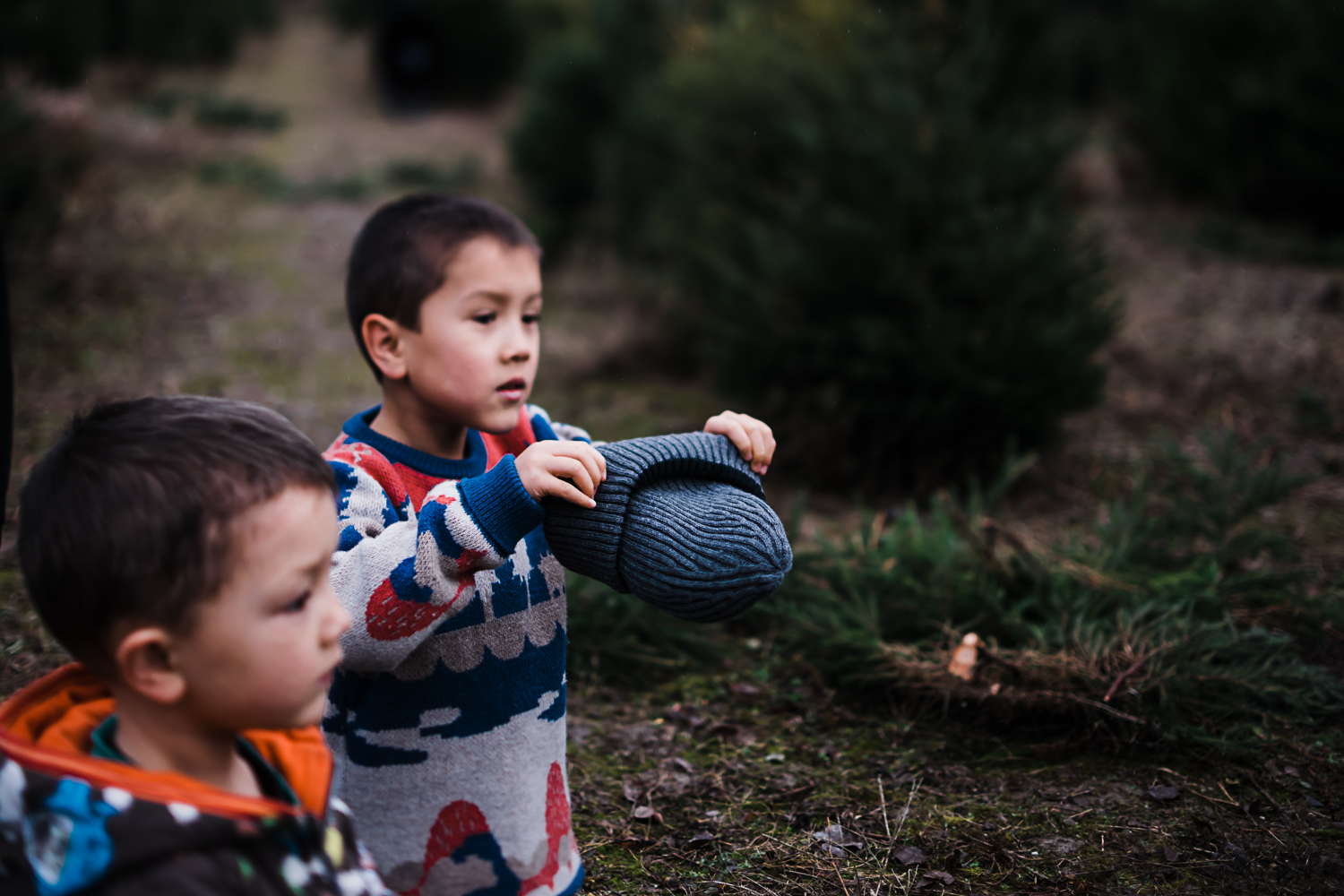 Children at the Christmas tree farm - Storytelling photography