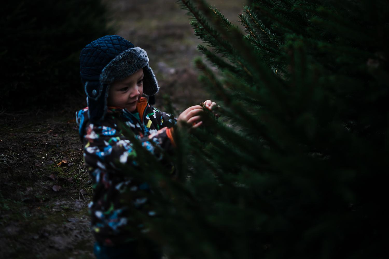 Boy inspecting pine needles on Christmas family photoshoot