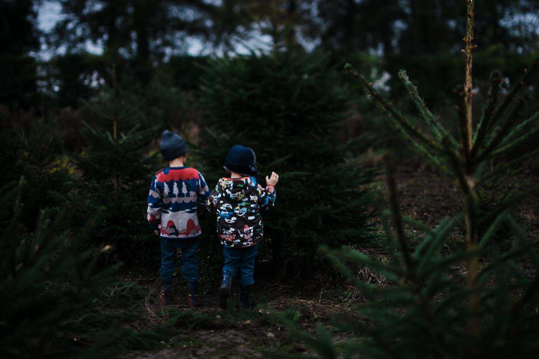 Finding the perfect Christmas tree at Bottisham tree farm
