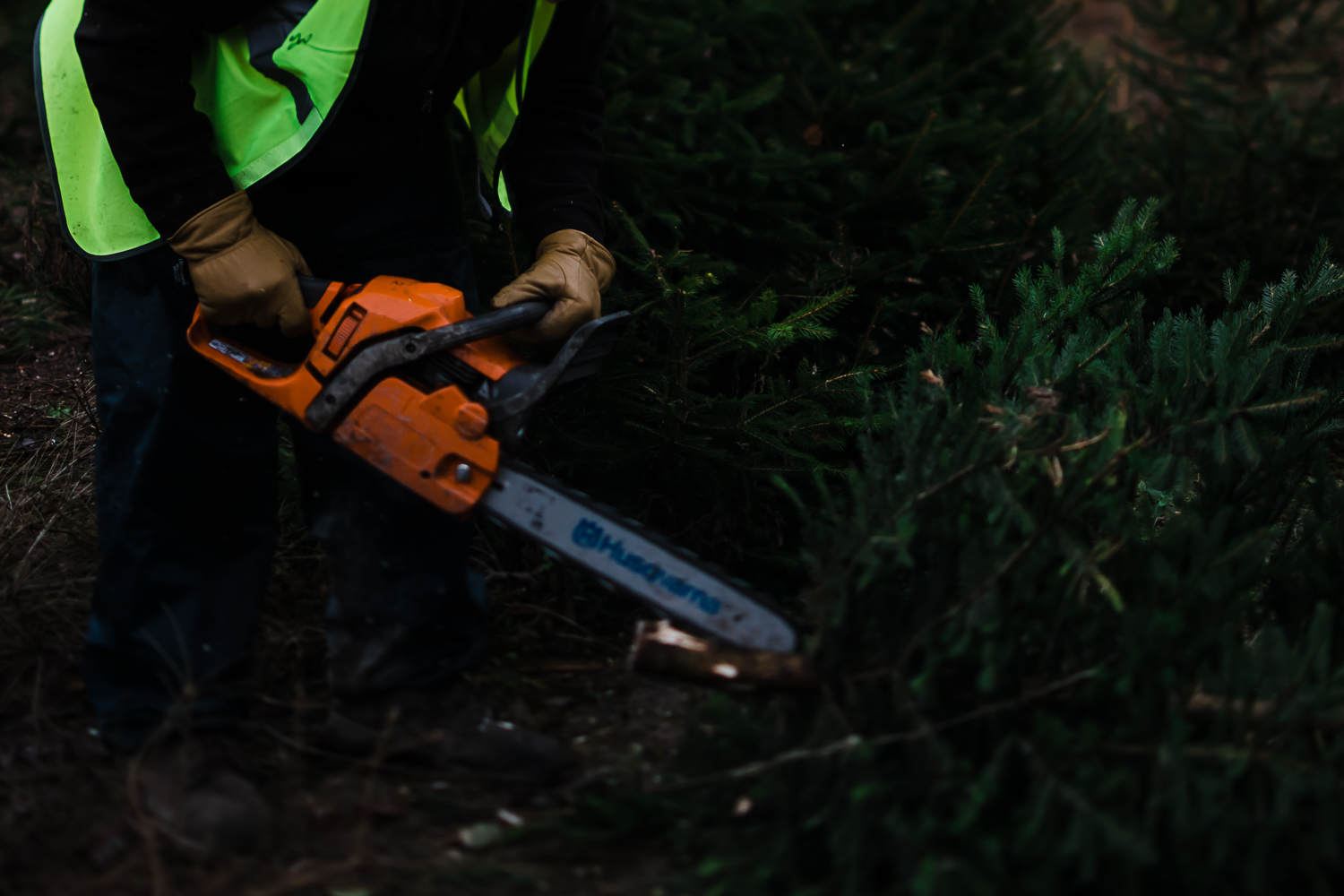 Chopping down the Christmas tree health and safety