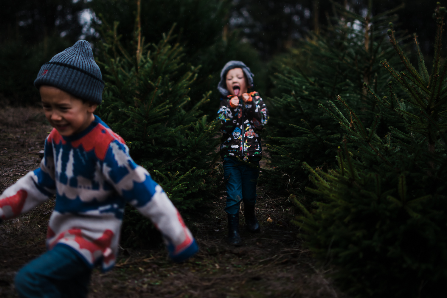 Running through the rows of Christmas trees at Bottisham tree farm - Family documentary photography by Diana Hagues
