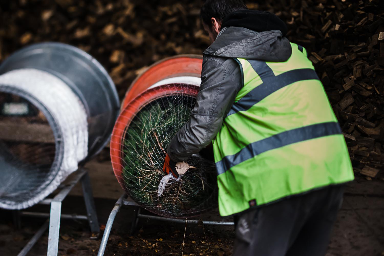 Netting the Christmas tree - storytelling photography
