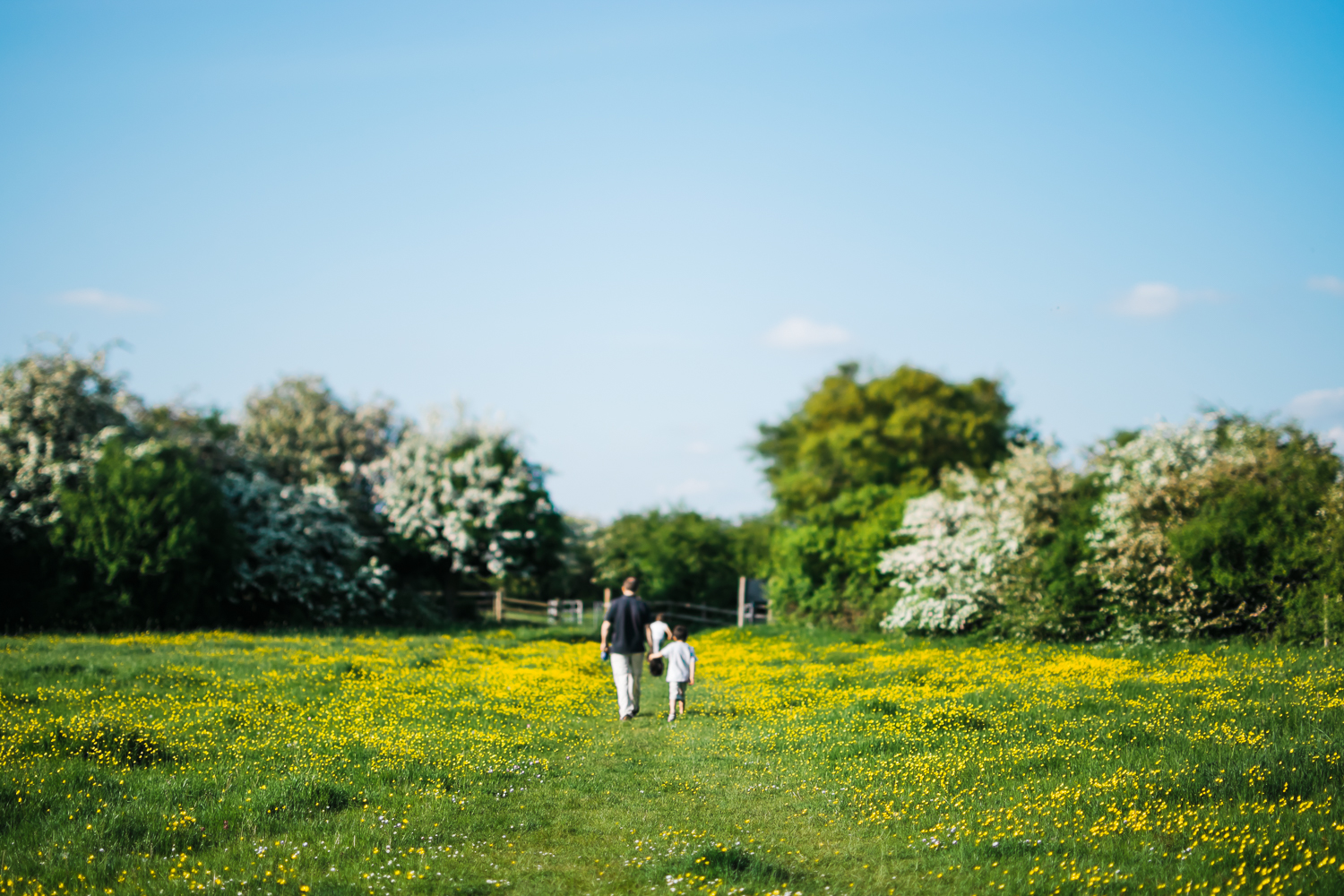 People walking in a buttercup field