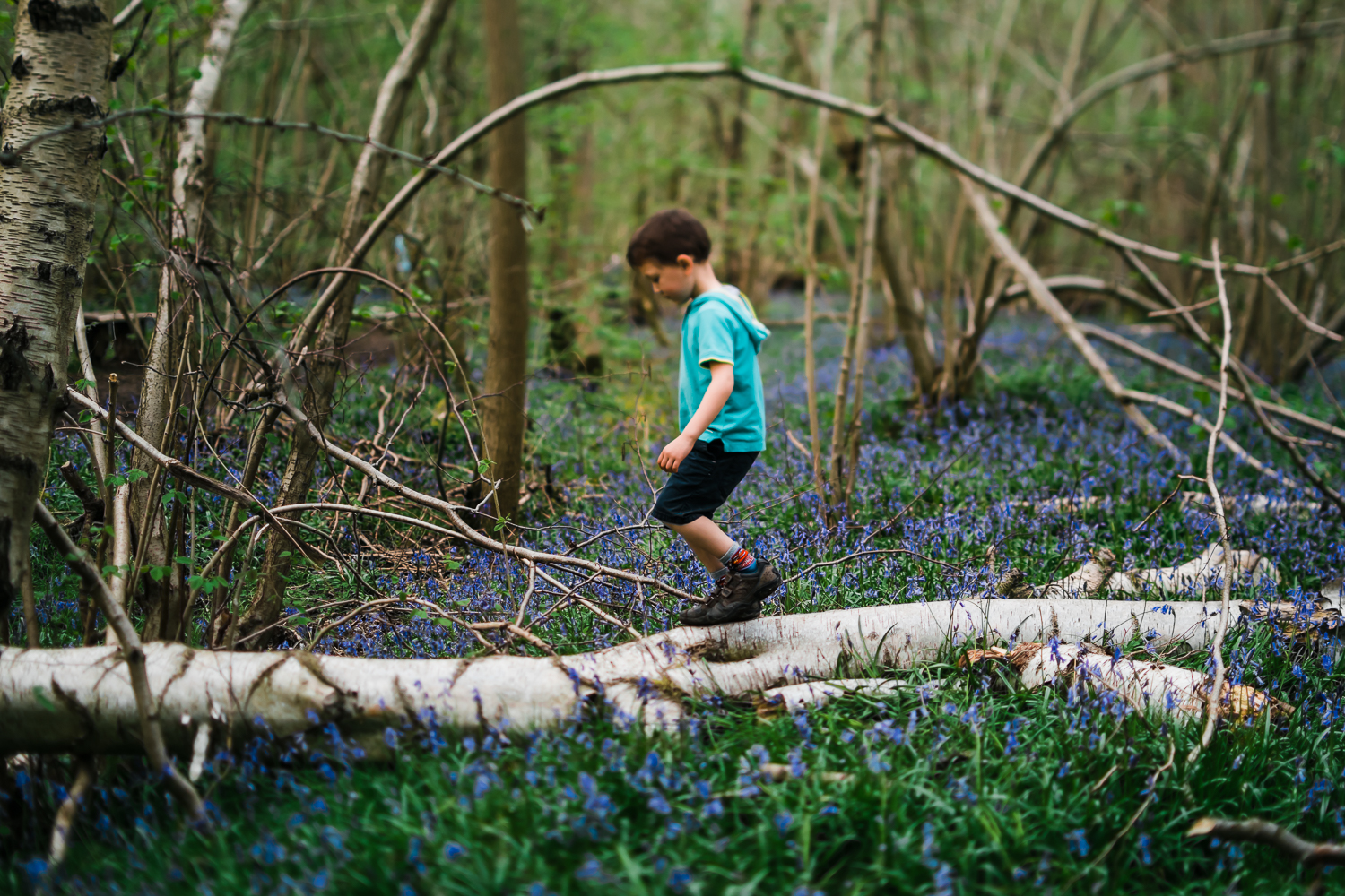 Child in a Wildlife Trust bluebell woodland