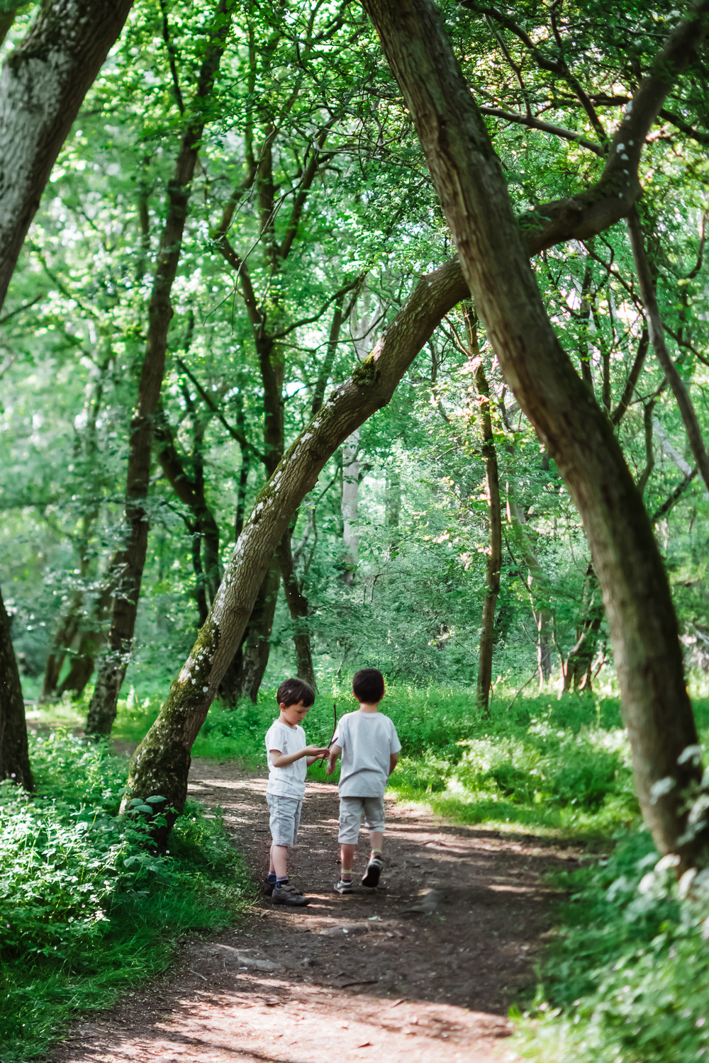 Children in a woodland setting