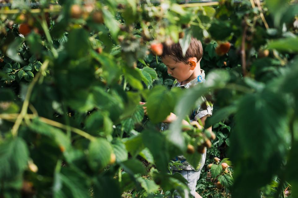 Boy framed between the raspberry bushes