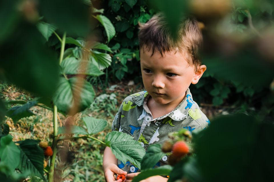 A picture of a little boy framed by the raspberry bushes