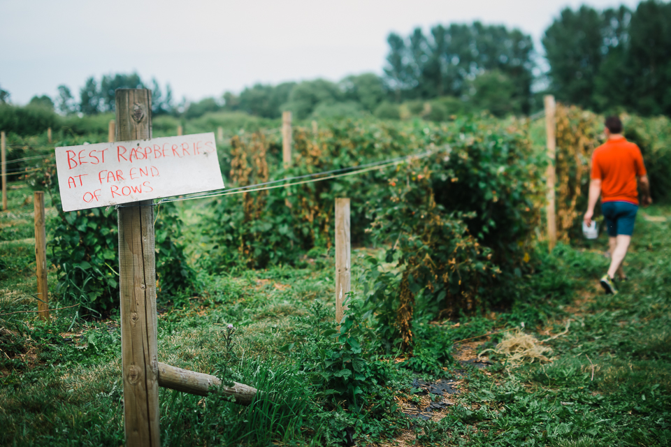 Sign leading to the rows of raspberries at a pick-your-own farm