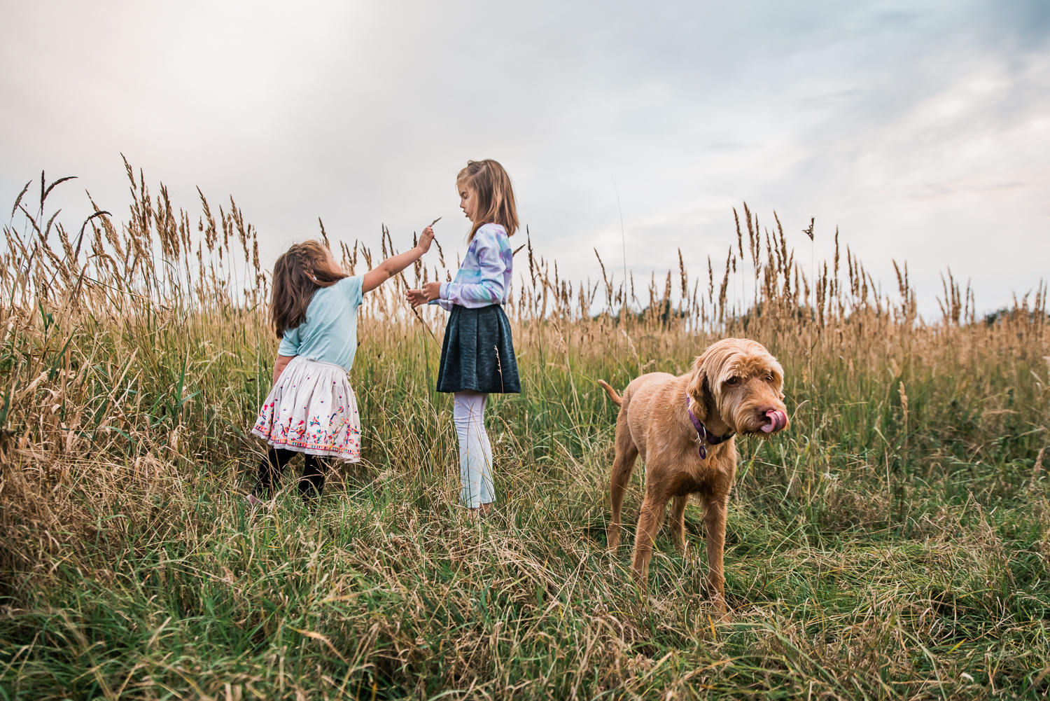 Children and their Hungarian Vizsla family pet in the grassland