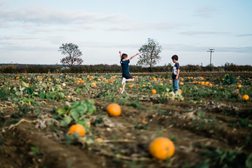Children in the pumpkin field