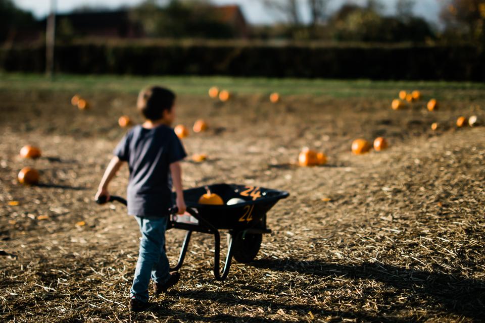 Boy wheeling his pumpkins from the pumpkin field