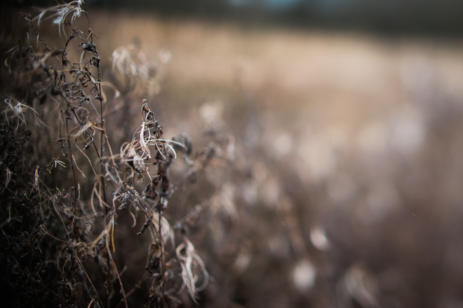 Winter vegetation brown colour, Diana Hagues Photography, Cambri