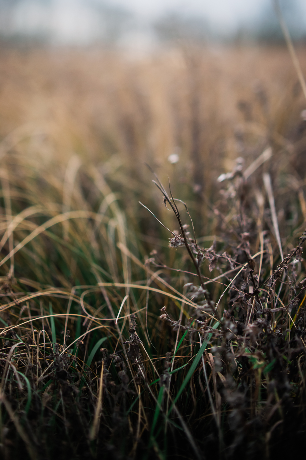 Brown and green vegetation - freelensed photograph - taken in wi