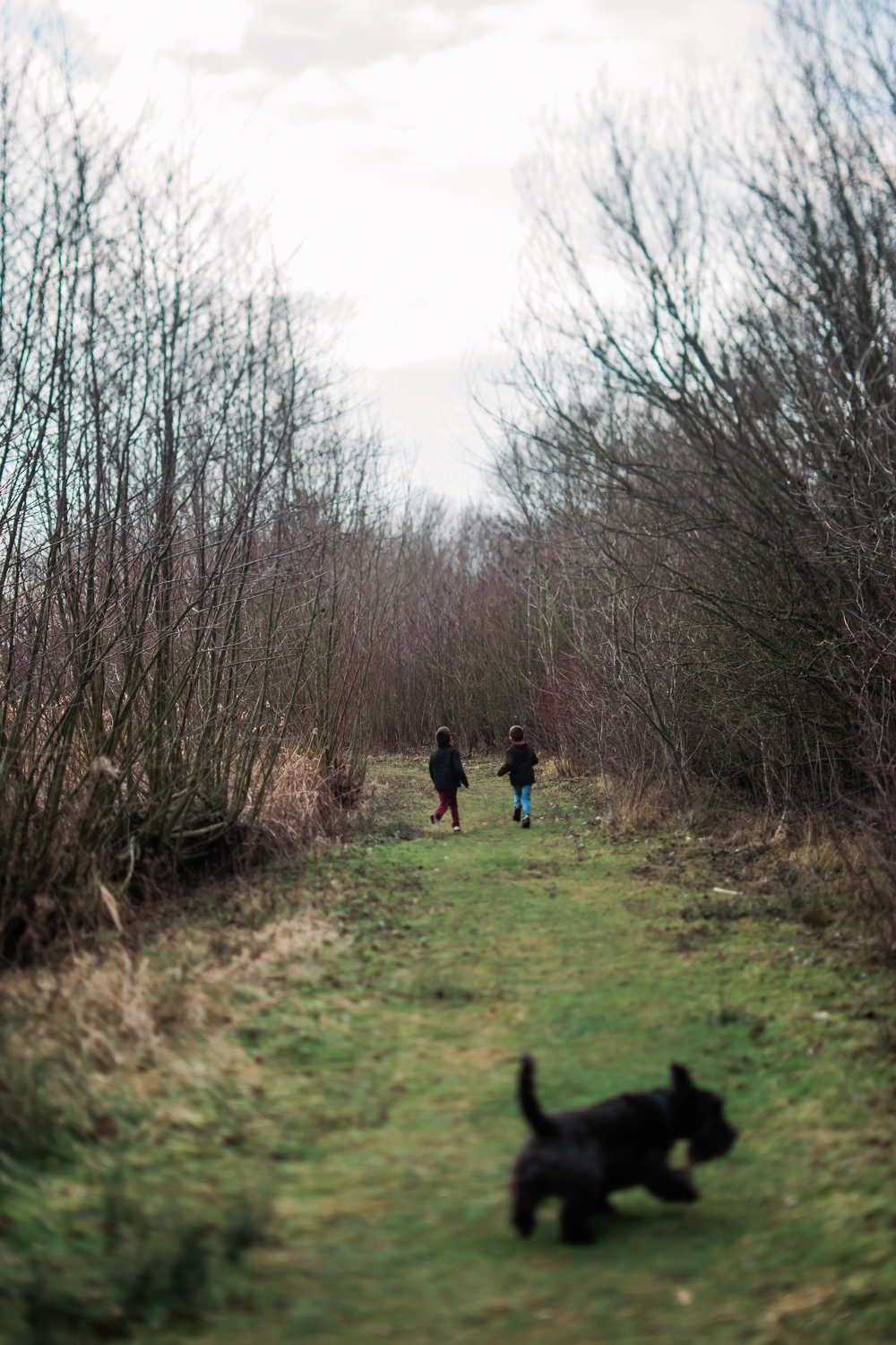 Two boys running down a grass path and a black dog in the foregr