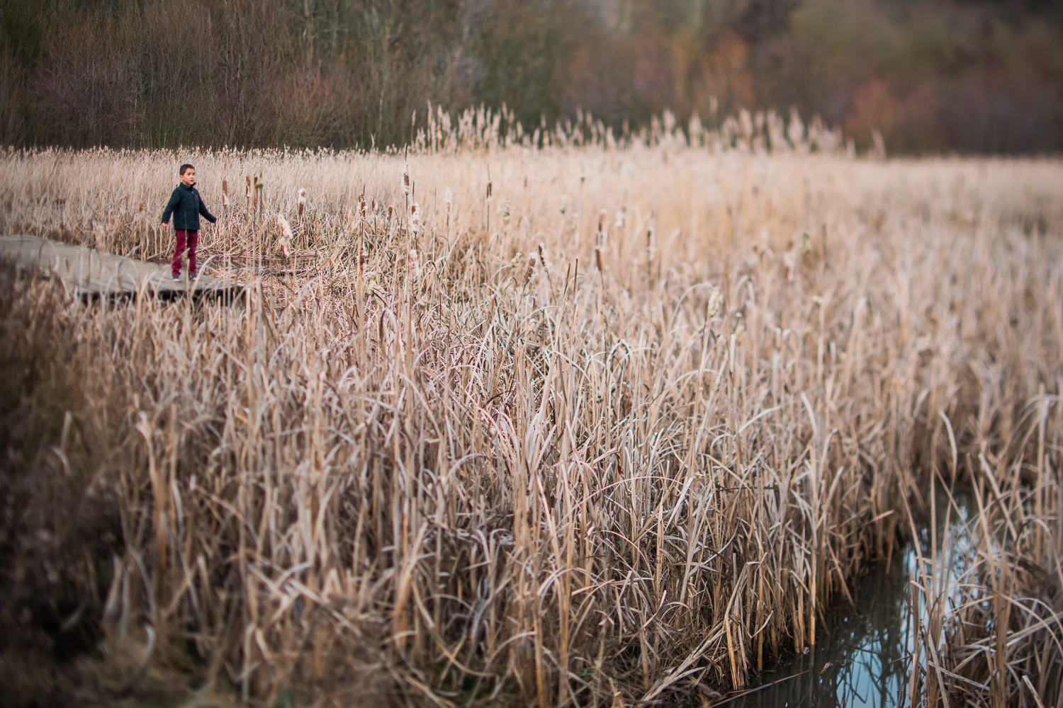 Boy in red trousers amongst the reedbed at Hinchingbrooke Park,