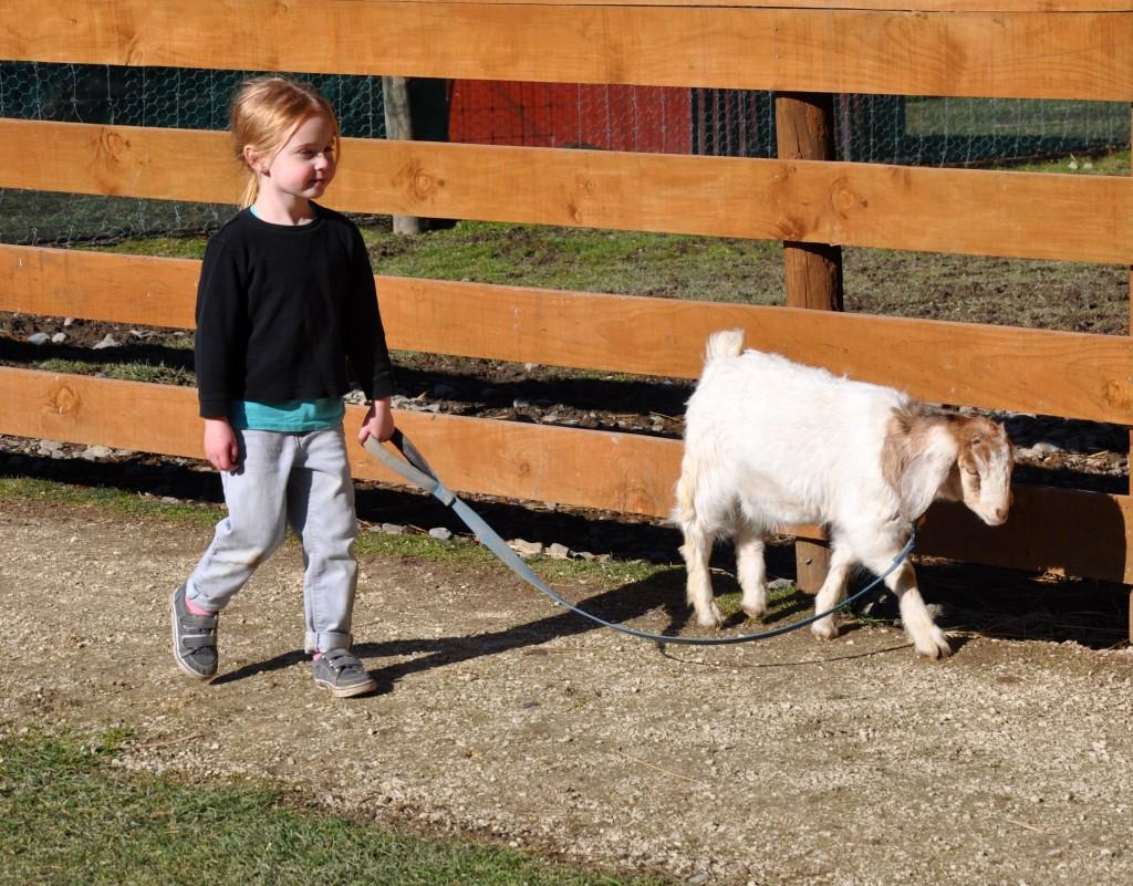Hanmer Springs Animal Farm