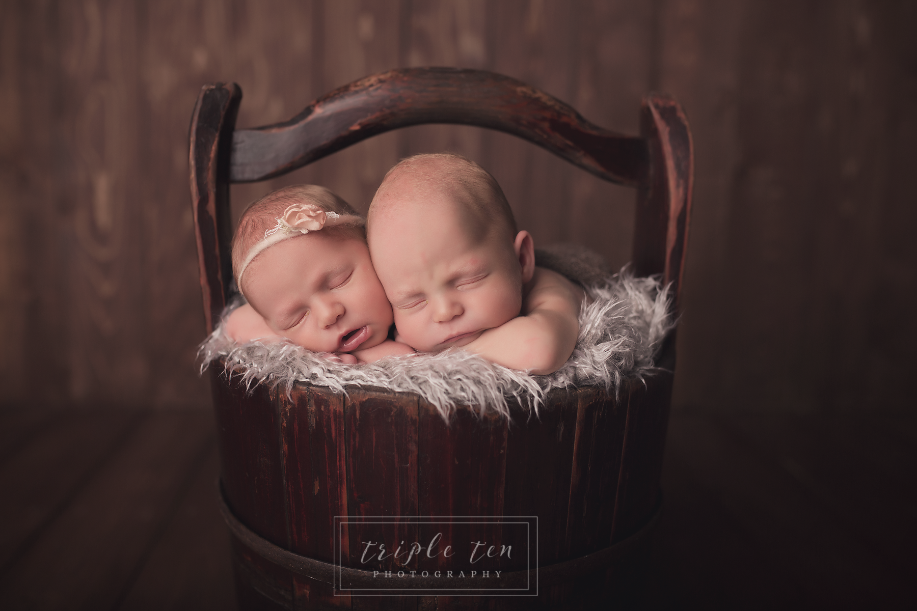 red deer newborn twins photos.png
