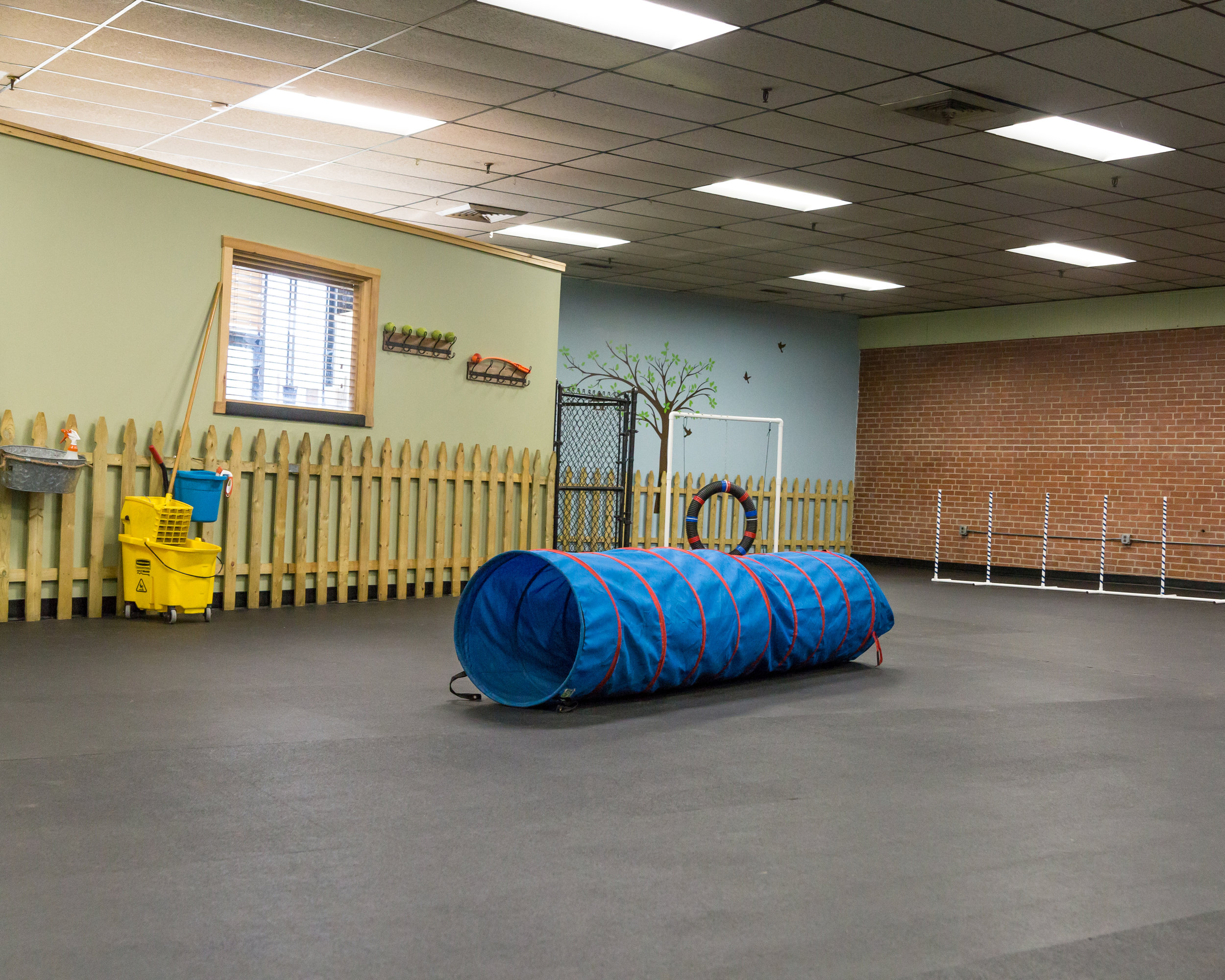 Fungility Gym at Camp K-9 where dogs can play and learn some agility tricks