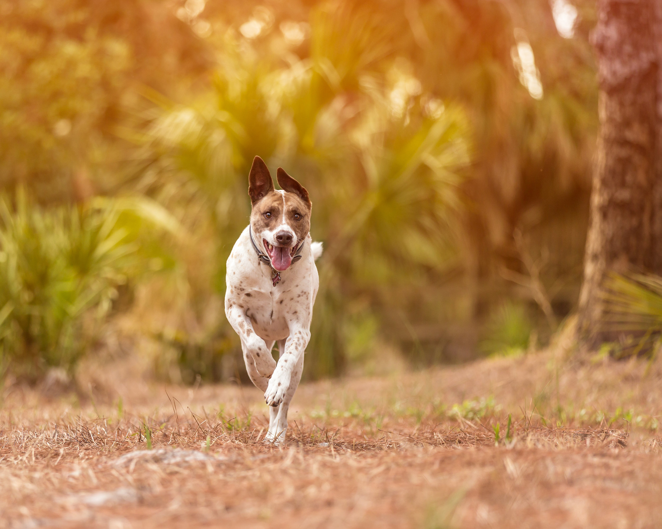 Action shot- rescue dog- mixed breed