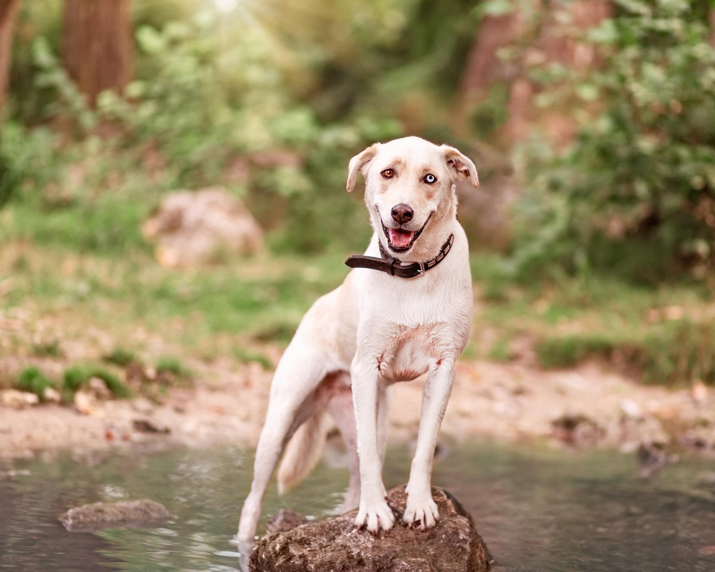 Northern Connecticut dog photographer