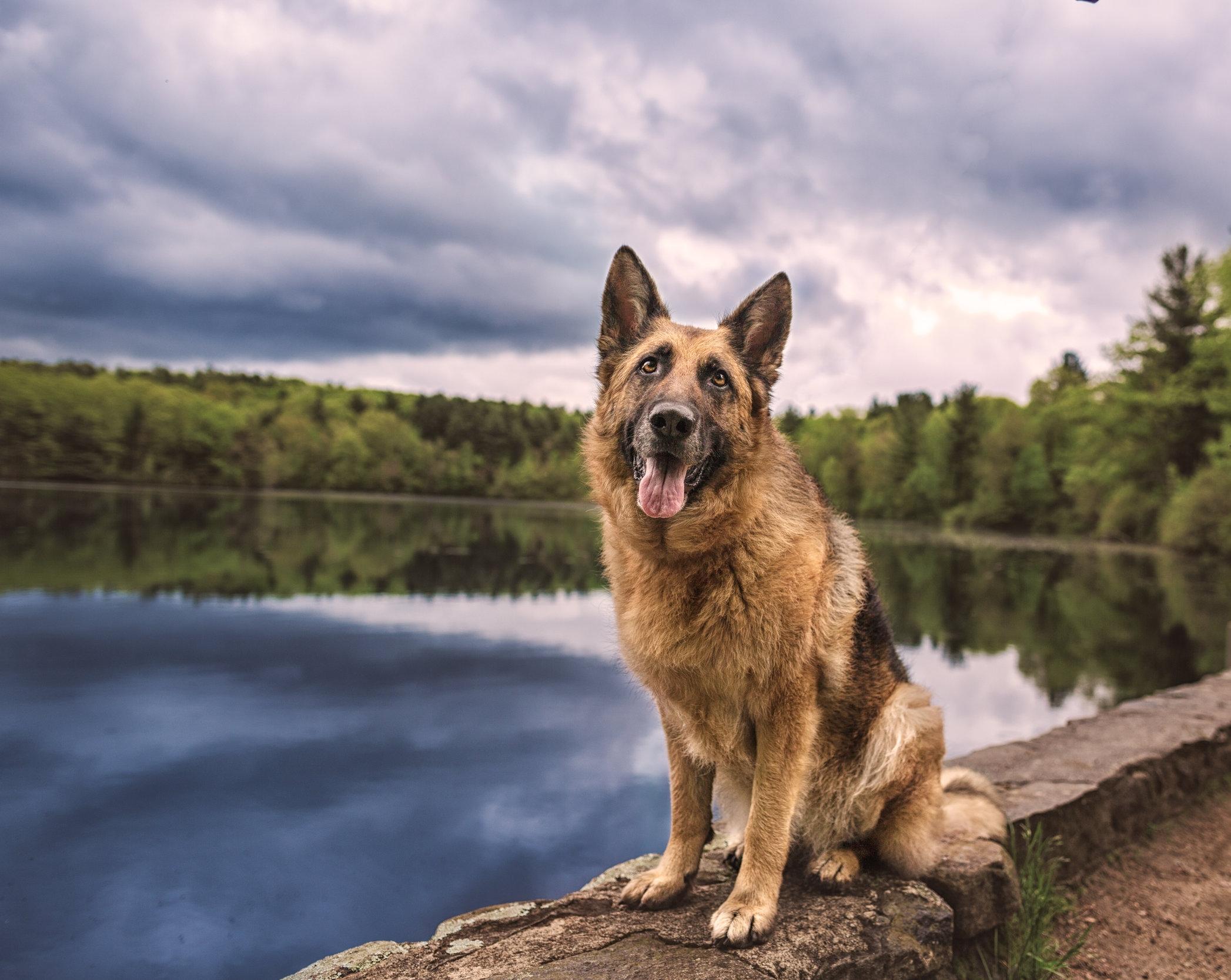 Massachusetts dog photographer