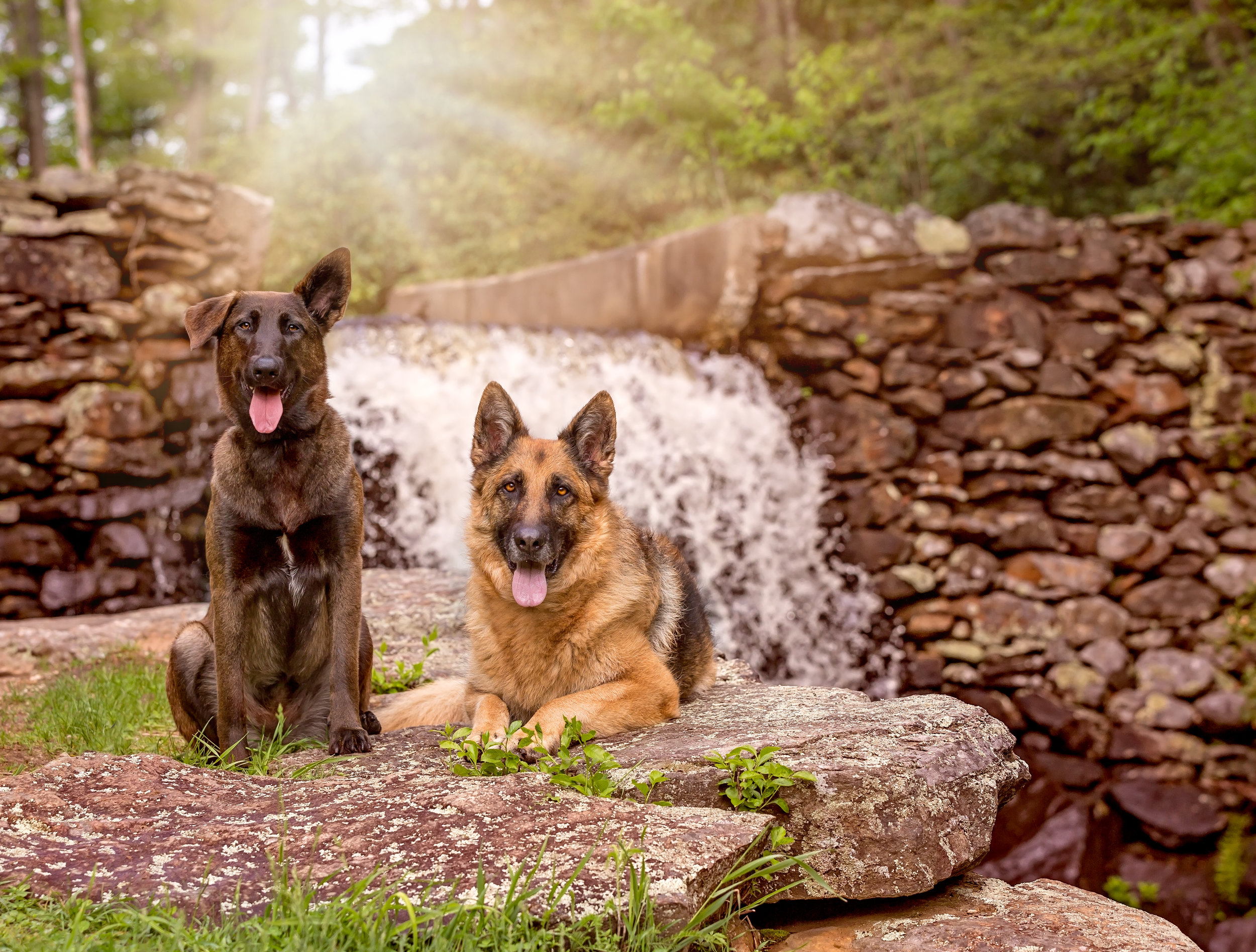 Rescue pet photographer