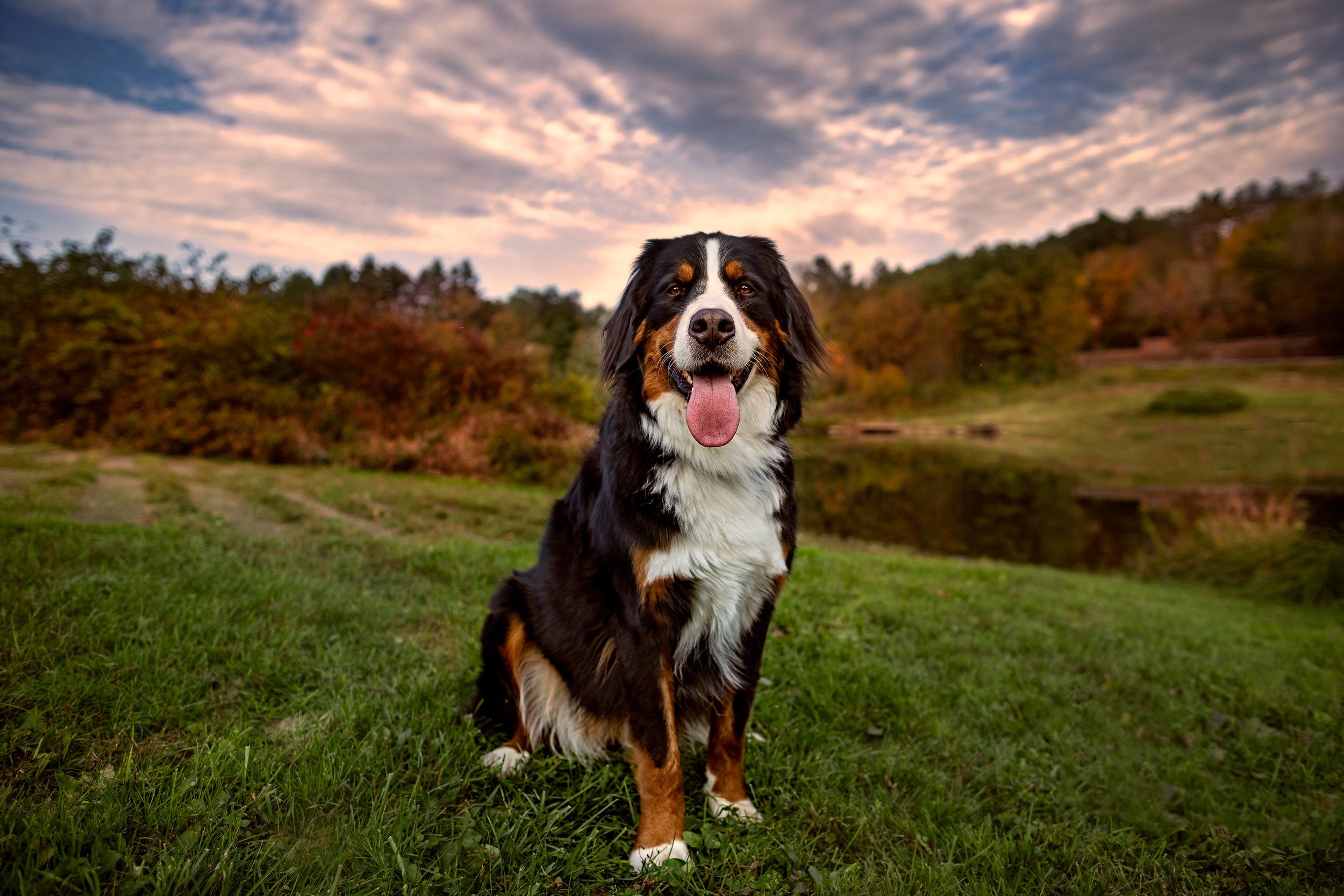 Connecticut pet photographer