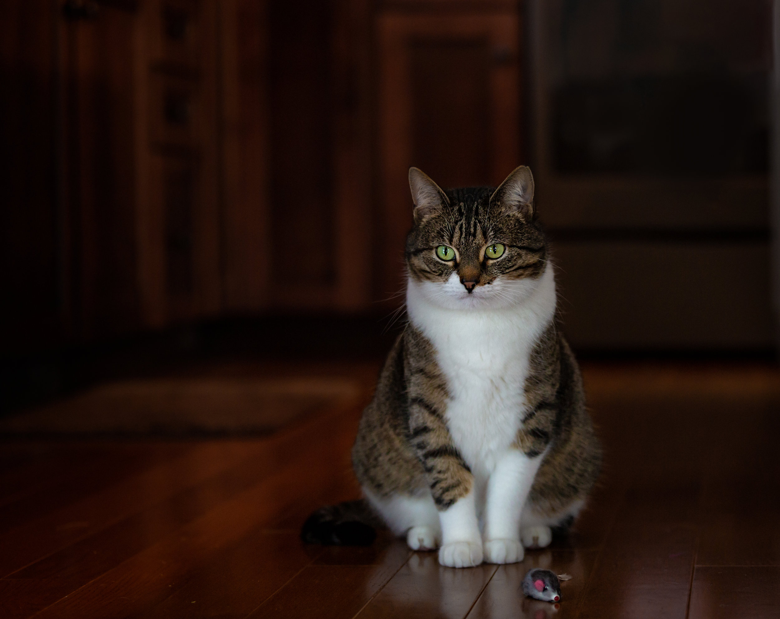 Northern Connecticut cat photographer