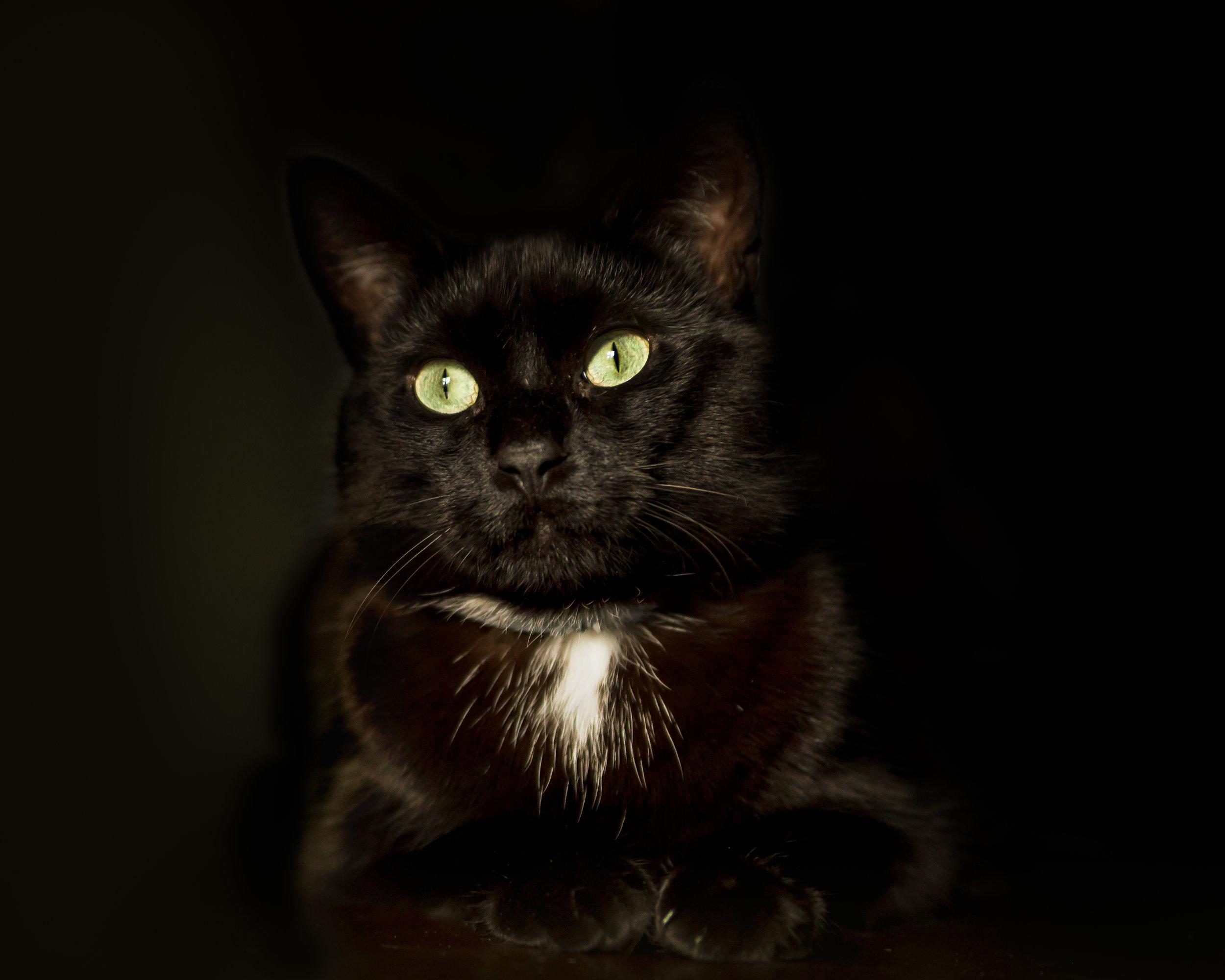 Connecticut cat photographer