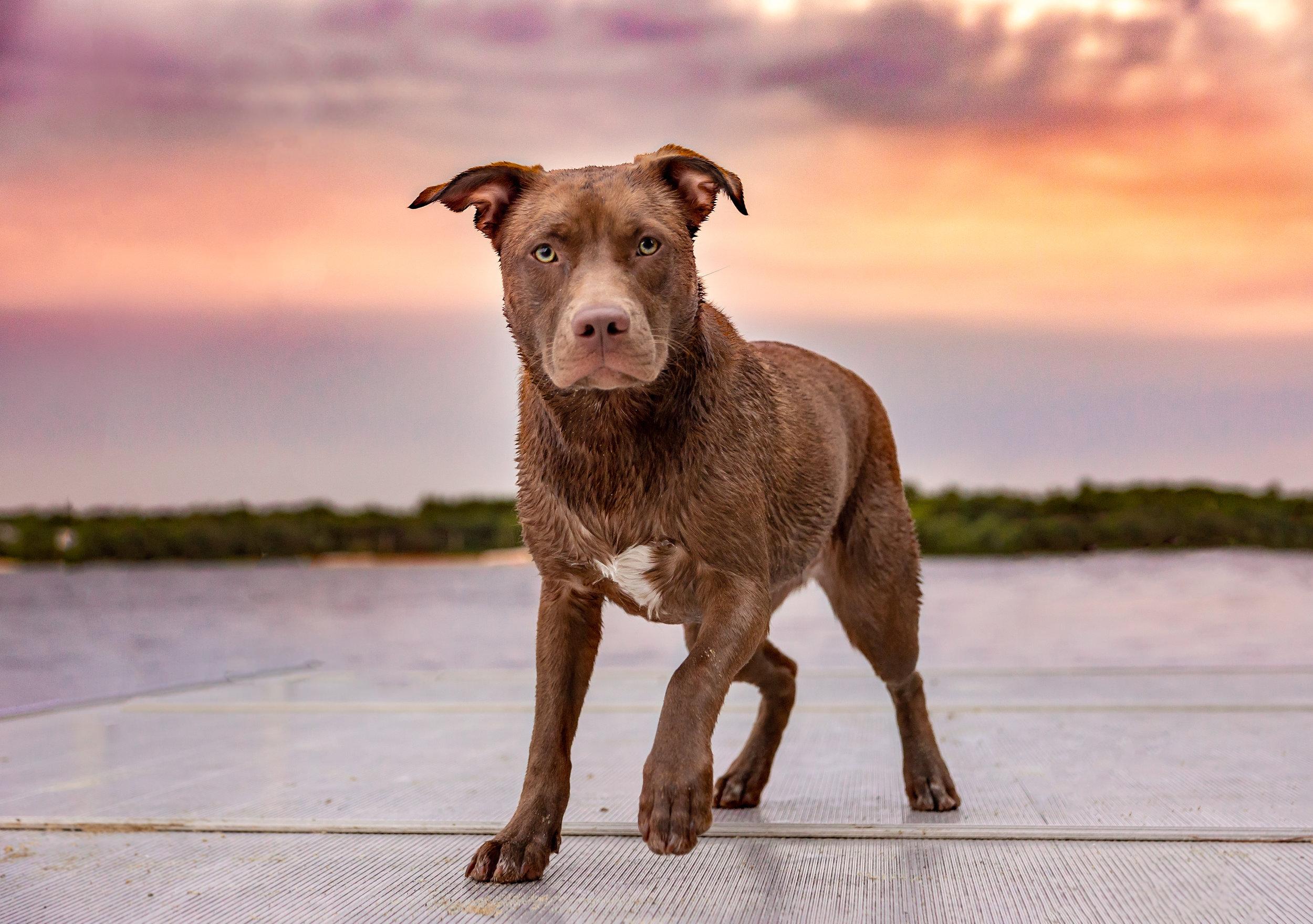 Springfield dog photographer